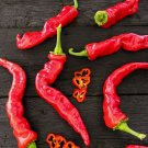 HEIRLOOM NON GMO Maule's Red Hot Pepper 15 seeds