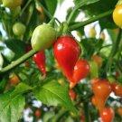 HEIRLOOM NON GMO Pimiento De Padron Hot Pepper 15 seeds
