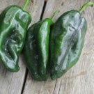 HEIRLOOM NON GMO Poblano Pepper Hot Pepper 15 seeds