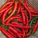 HEIRLOOM NON GMO Ring of Fire Pepper Hot Pepper 15 seeds