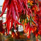 HEIRLOOM NON GMO Tesuque Chile Hot Pepper 15 seeds
