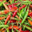 HEIRLOOM NON GMO Thai Burapa Hot Pepper 15 seeds