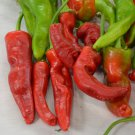 HEIRLOOM NON GMO Tunisian Baklouti Hot Pepper 15 seeds