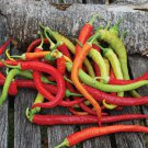 HEIRLOOM NON GMO Corbaci Pepper 25 seeds