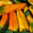 HEIRLOOM NON GMO Corno di Toro Giallo Pepper 25 seeds
