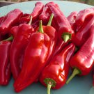 HEIRLOOM NON GMO Spanish Mammoth Pepper 25 seeds
