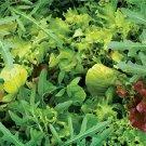HEIRLOOM NON GMO European Mesclun Lettuce Mix 250 seeds