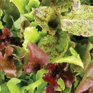HEIRLOOM NON GMO Rocky Top Lettuce Mix 250 seeds