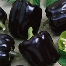 HEIRLOOM NON GMO Midnight Dreams Black Bell Pepper 25 seeds