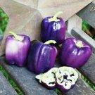 HEIRLOOM NON GMO Oda Purple Bell Pepper 25 seeds