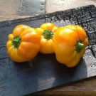 HEIRLOOM NON GMO Paradicsom Alaku Sarga Szentes Pepper 25 seeds