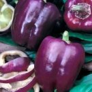 HEIRLOOM NON GMO Purple Beauty Pepper 25 seeds