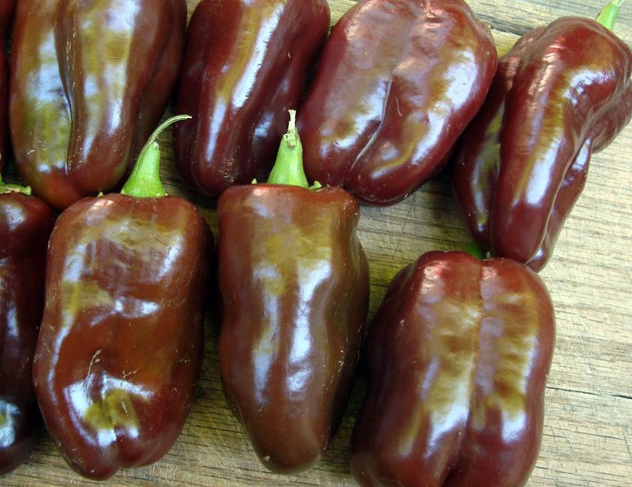 HEIRLOOM NON GMO Sweet Chocolate Pepper 25 seeds