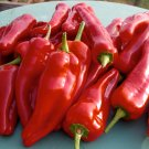 HEIRLOOM NON GMO Syrian Three Sided Pepper 25 seeds