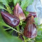 HEIRLOOM NON GMO Violet Sparkle Pepper 25 seeds