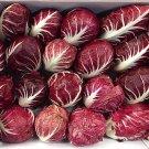 HEIRLOOM NON GMO Rossa di Verona Radicchio 25 seeds