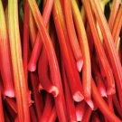 HEIRLOOM NON GMO Glaskins Perpetual Rhubarb 25 seeds