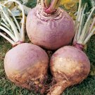 HEIRLOOM NON GMO American Purple Top Rutabaga  200 seeds