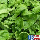 HEIRLOOM NON GMO Gigante d' Inverno Spinach 100 seeds