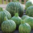 HEIRLOOM NON GMO Ronde De Nice Squash 15 seeds