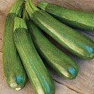 HEIRLOOM NON GMO Zucchini Fordhook Squash 15 seeds