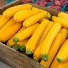 HEIRLOOM NON GMO Zucchini Golden Squash 15 seeds