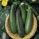 HEIRLOOM NON GMO Zucchini Green Bush Squash 15 seeds