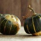 HEIRLOOM NON GMO Buttercup Winter Squash 15 seeds