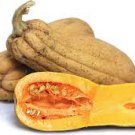 "HEIRLOOM NON GMO Butternut Rogosa Violina ""Gioia"" Winter Squash 15 seeds"