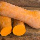 HEIRLOOM NON GMO Butternut-Orange Winter Squash 15 seeds