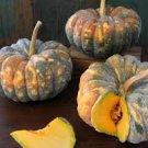 HEIRLOOM NON GMO Chiriman Winter Squash 15 seeds