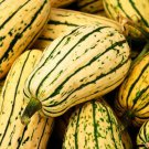HEIRLOOM NON GMO Delicata Winter Squash 15 seeds