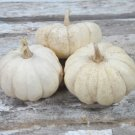HEIRLOOM NON GMO Dishpan Cushaw SquashWinter Squash 15 seeds