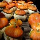 HEIRLOOM NON GMO Fungo Winter Squash 15 seeds