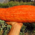 HEIRLOOM NON GMO Gete Okosomin Winter Squash 15 seeds