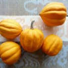HEIRLOOM NON GMO Gills' Golden Pippin Winter Squash 15 seeds