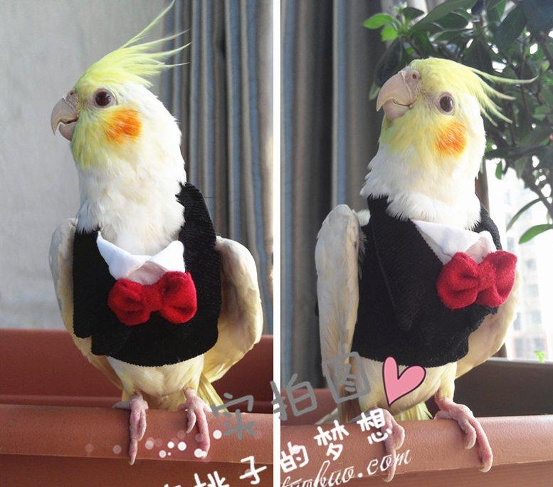 Hand made Pet Parrot Bird Clothes Cockatiel cockatoo Parakeet Macaw Conure Birdlover Clothes
