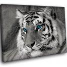 Black White Tiger Blue Eyes Wild Cat 30x20 Framed Canvas Art Print
