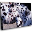 Appaloosa Horse Unique Leopard Spotted Color 50x40 Framed Canvas Art Print