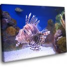 Red Lionfish Fish Caribbean Sea Coral Reef 30x20 Framed Canvas Art Print