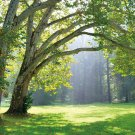 Tropical Forest Green Sunshine Forest 3D Full Wall Mural Photo Paper Wallpaper