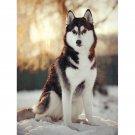 wolf on snow Diamond Painting DIY kit Canvas Painting Wall Art Mosaic Painting