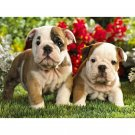 bulldog puppies Diamond Painting DIY kit Canvas Painting Wall Art Mosaic Painting