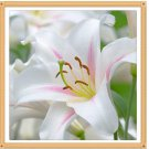 lily flower Diamond Painting DIY kit Canvas Painting Wall Art Mosaic Painting