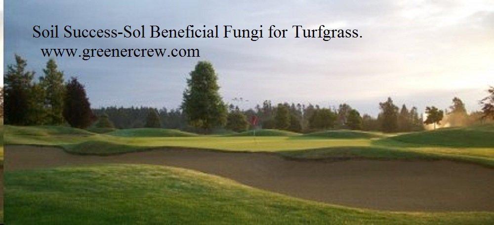 Organic Soil Success-Sol Beneficial Fungi for Turfgrass