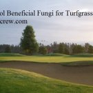 Organic Soil Success-Sol Beneficial Fungi for Turfgrass