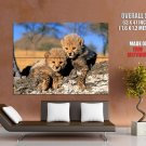 Cute Cheetah Cubs Nature Animals Huge Giant Print Poster