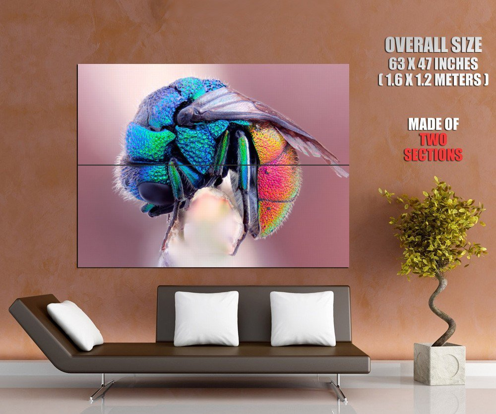 Colorful Fly Macro Insect Animal Pearl GIANT 63x47 Print Poster
