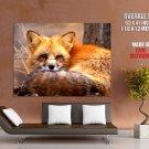 Fox Animal Close Huge Giant Print Poster