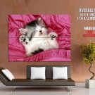 Cute Kitty Sleeping Cat Pink Huge Giant Print Poster